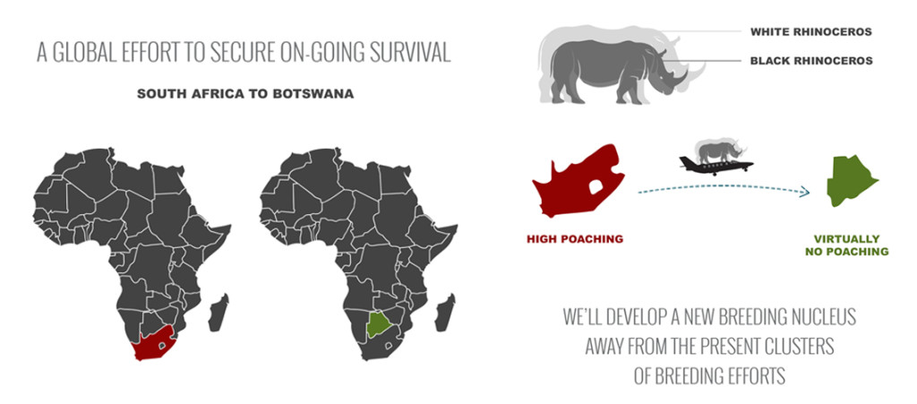 About The Project - Rhinos Without Borders