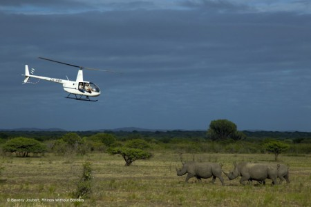 Helicopter flying above 2 rhinos
