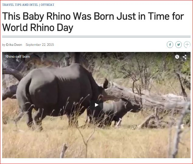 New baby rhino signals hope in war against poaching