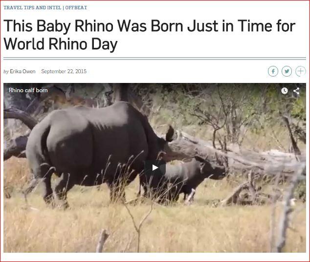 New baby rhino signals hope in war against poaching
